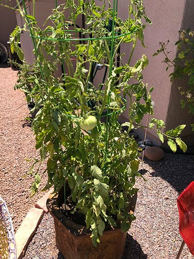 Veganic Gardening – An Update from My May 5, 2020 Blog Post