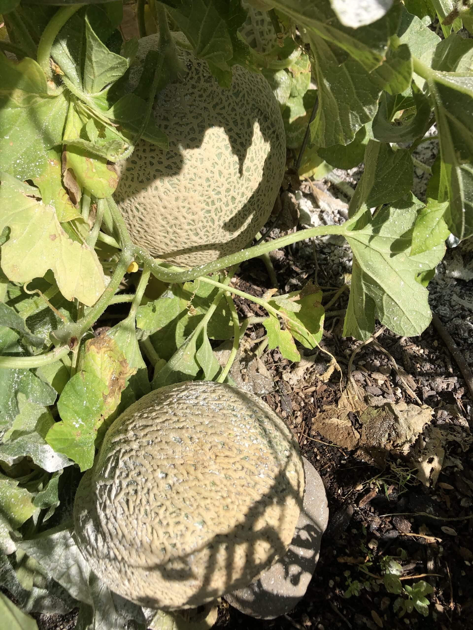 The Wonders of My Garden, and The Joys of Composting